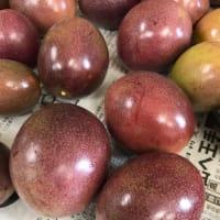 パッションフルーツも終盤 /パッションフルーツ/まるとよ農産/沖永良部島