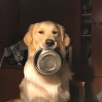 食べ終わりまちた!