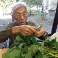 柳原第2 畑の枝豆収穫