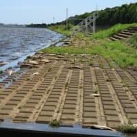 台風15号後の黒部川 わらしぶの影響か魚大量死