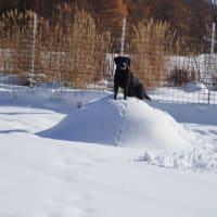 雪遊びディ♪