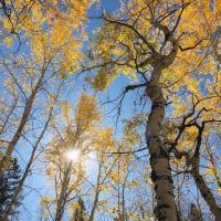秋の風景 2