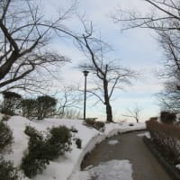 日曜朝の千秋公園を歩きました。
