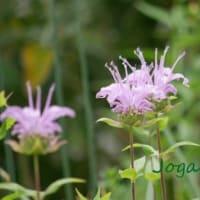 季節の花とお取り寄せと特製バッジと