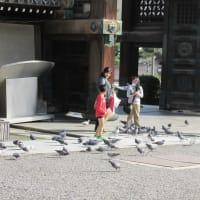 東本願寺に行ってみた。