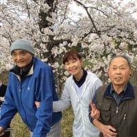 🌸お花見ドライブ 第2弾🌸
