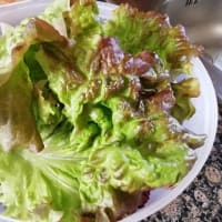 2021 我が家の家庭菜園 サラダ菜