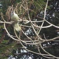 大寒の季節の野鳥と野草