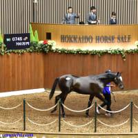 JRA競走に勝ったセール出身馬紹介(2019/11/30-12/1、ナックビーナスなど22頭)