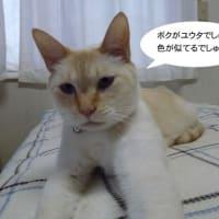 福猫茶房さん : 2月22日