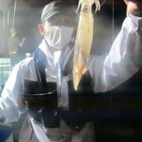 6/13(日)本日マイカ一升瓶サイズ多数ゲット^^赤物も型良くアコウにウッカリカサゴに鬼カサゴにアマダイも(*^^*)ノ