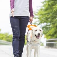 ヌマジ一緒に学ぼうの会~盲導犬との関わり方について 第4回~