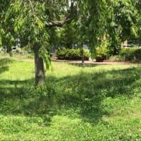 サクラ公園で賛美、西窓カーテン 🌸 2019年6月18日