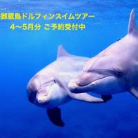 御蔵島ドルフィンスイムツアー  4〜5月分ご予約受付中