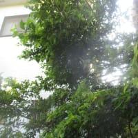 アオスジアゲハ蝶のドッキング
