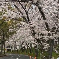 桜とコーヒーで癒されました!