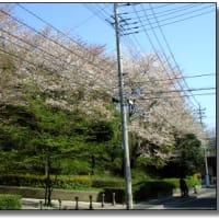 桜の季節もそろそろ・・・