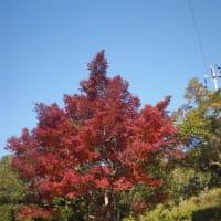 〜秋の装い〜