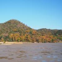 紅葉なごり 遍照寺山、池の茶屋の紅葉 広沢池の鯉揚げ