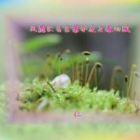 TAO575交心『 凡愚にも言葉が友よ春の風 』yxx2201