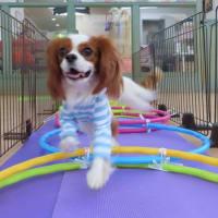 幼稚園体験にきてくれたミニチュアダックスフンドの【ココアちゃん】 犬のしつけ教室@アロハドギー