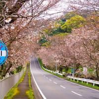サクラ咲く長崎  諫早市の古川地区で・・・ 2020/3/28