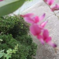 昼下がりの動き&花