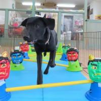 【緊急告知】Shore'sさんのお洋服受注会開催のご案内&未病ケアの《Dogscan》開催しました!【ALOHA塾】  犬のしつけ教室@アロハドギー