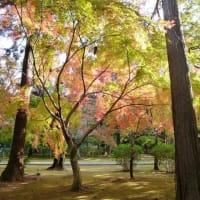 東漸寺の紅葉始まる