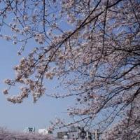 春満開 Part 5