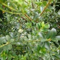 植木でできたトピアリー迷路を体験してみては?