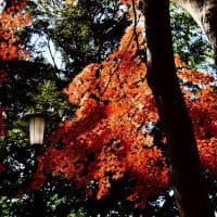 佐倉城址公園と成田山公園