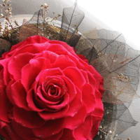 ♪ダイヤモンドローズ・真赤な薔薇♪