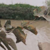 台風一過・三日めの荒川河川&「岸辺のアルバム」