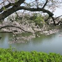 ブラ散歩~三ッ池公園