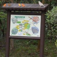 ホテルより徒歩5分 野鳥の森