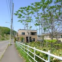 2019年5月19日。札幌→北広島→上野幌