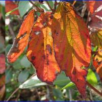 葉っぱの秋