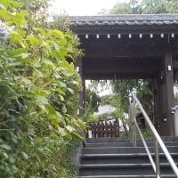 梅雨の鎌倉;雨の音を聞きながら大船駅まで往復