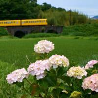 めがね橋と紫陽花