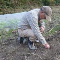 春野菜の種まきなど