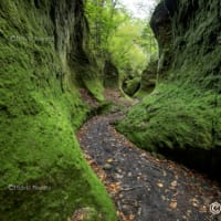 日本風景写真家協会のトップページ担当