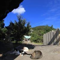 瀬戸内B島の猫たち 2019年9月 その55