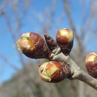 春の気配…4月の臨時休業のお知らせ