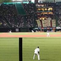 久しぶりの野球観戦