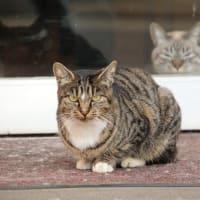 内猫vs外猫