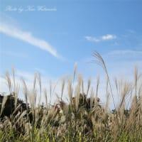 ちいさい秋みつけた:岡山県総合グラウンド