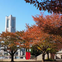 横浜みなとみらいの秋景色