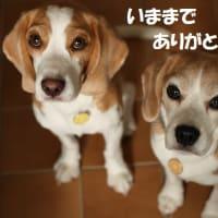 さよなら!みかん絵日記 OCN版