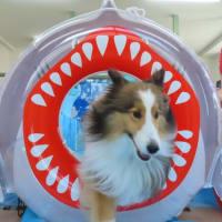 欠品していたオヤツ&フードが入荷しました【MOTTO】  犬のしつけ教室@アロハドギー